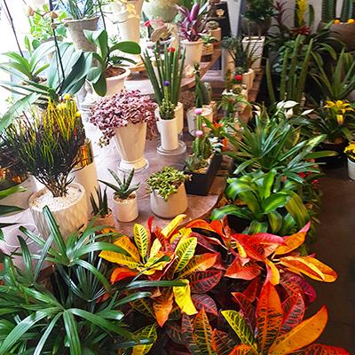 Les plantes de Remi Flowers and Coffee