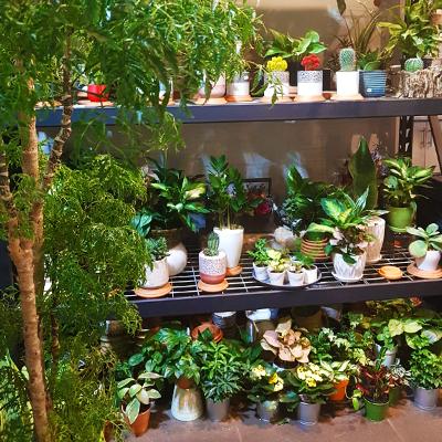 Les plantes et cactus de Remi Flowers and Coffee